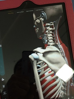 肩関節 (1).jpg